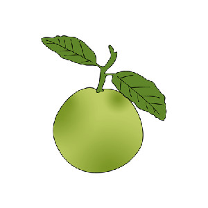 Image for Guava